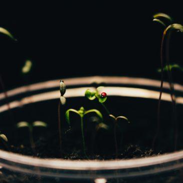 The Needs of Seeds
